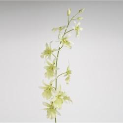 Tige d'orchidée...