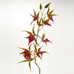 Tige d'orchidée Spider...