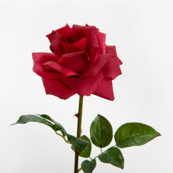 Tige de rose lady reality...